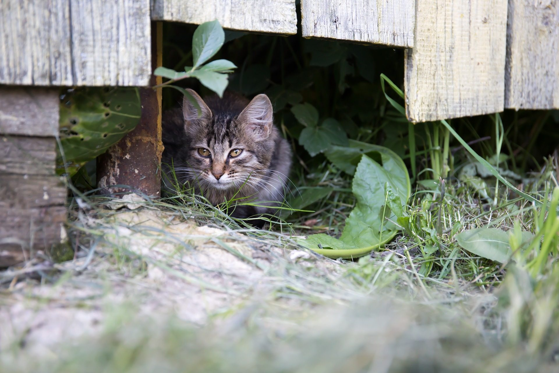 gato, Escondido, agachamento, Animal de estimação, felino, Jardim - Papéis de parede HD - Professor-falken.com