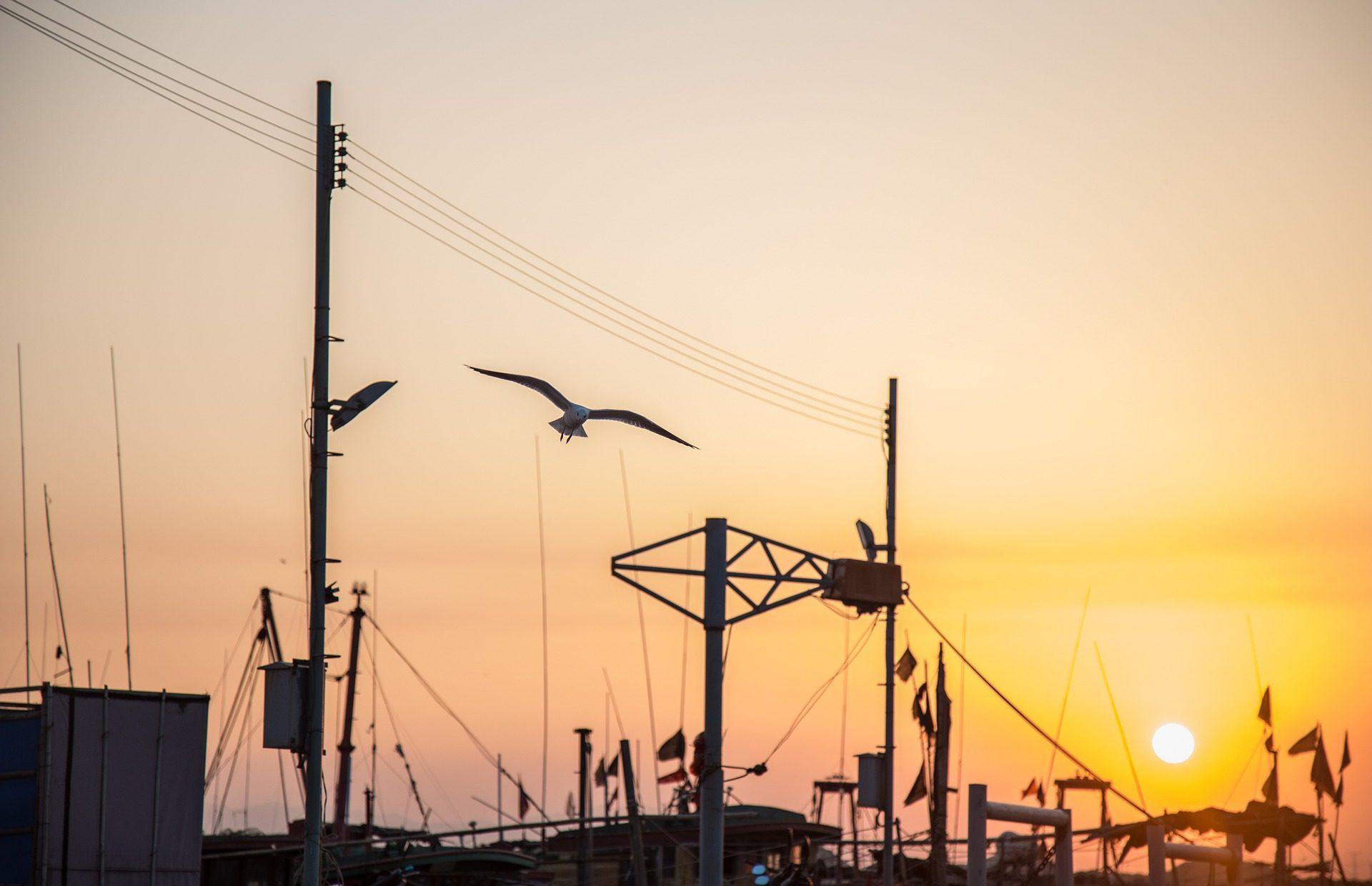 النوارس, قوارب, منفذ, mástiles, غروب الشمس - خلفيات عالية الدقة - أستاذ falken.com