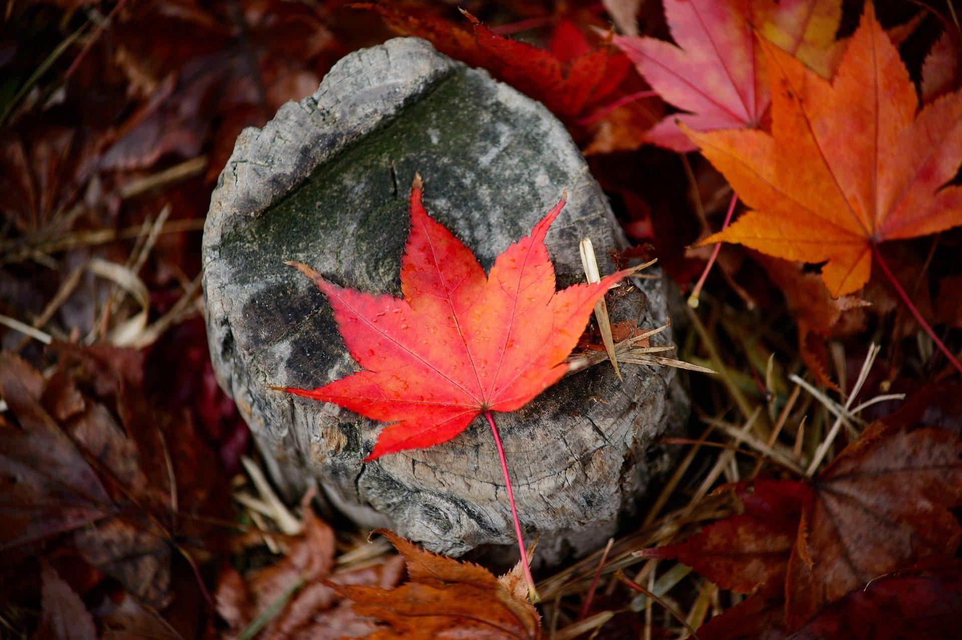 φύλλα, Πέτρα, απορρίματα φύλλων, υποκαταστήματα, φθινόπωρο - Wallpapers HD - Professor-falken.com
