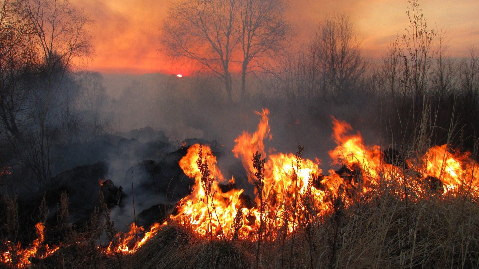 incendio, campo, fuego, llamas, destrucción, árboles - Fondos de Pantalla HD - professor-falken.com