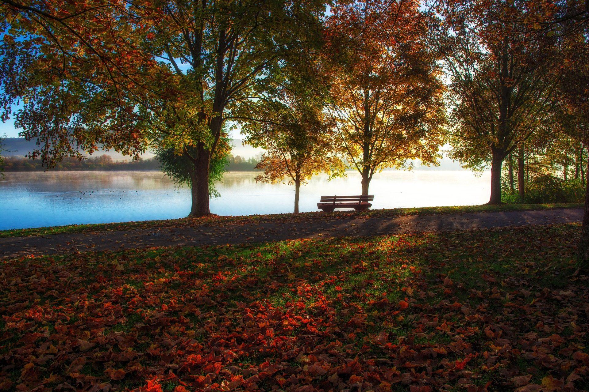 Lake, arbres, siège, Banque, feuilles, automne - Fonds d'écran HD - Professor-falken.com
