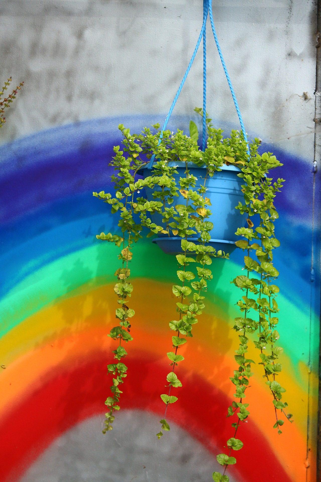 花盆, 地面层, 墙上, 绘画, 彩虹 - 高清壁纸 - 教授-falken.com