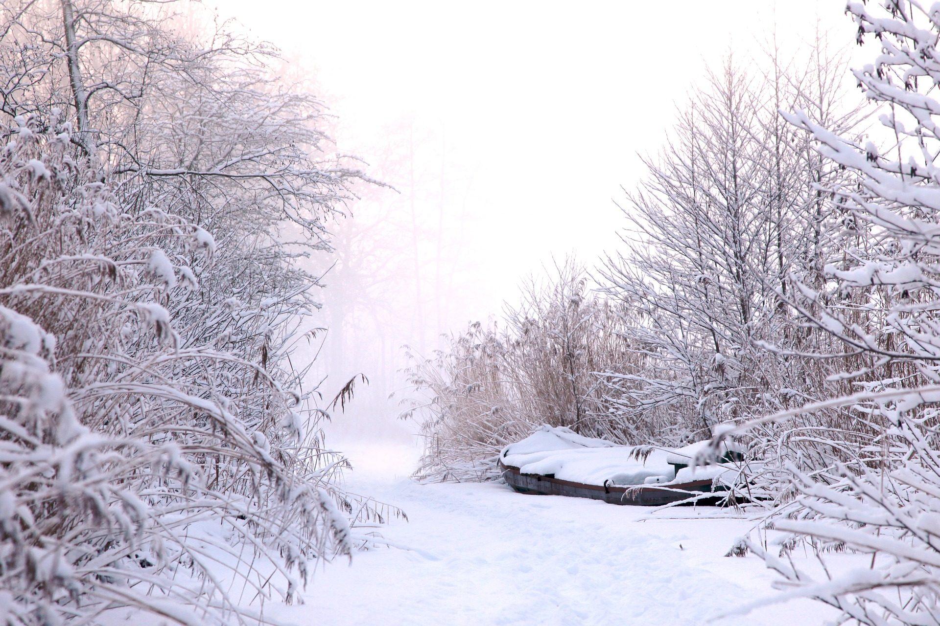 雪, 内华达, 树木, 冰, 感冒, 冬天 - 高清壁纸 - 教授-falken.com