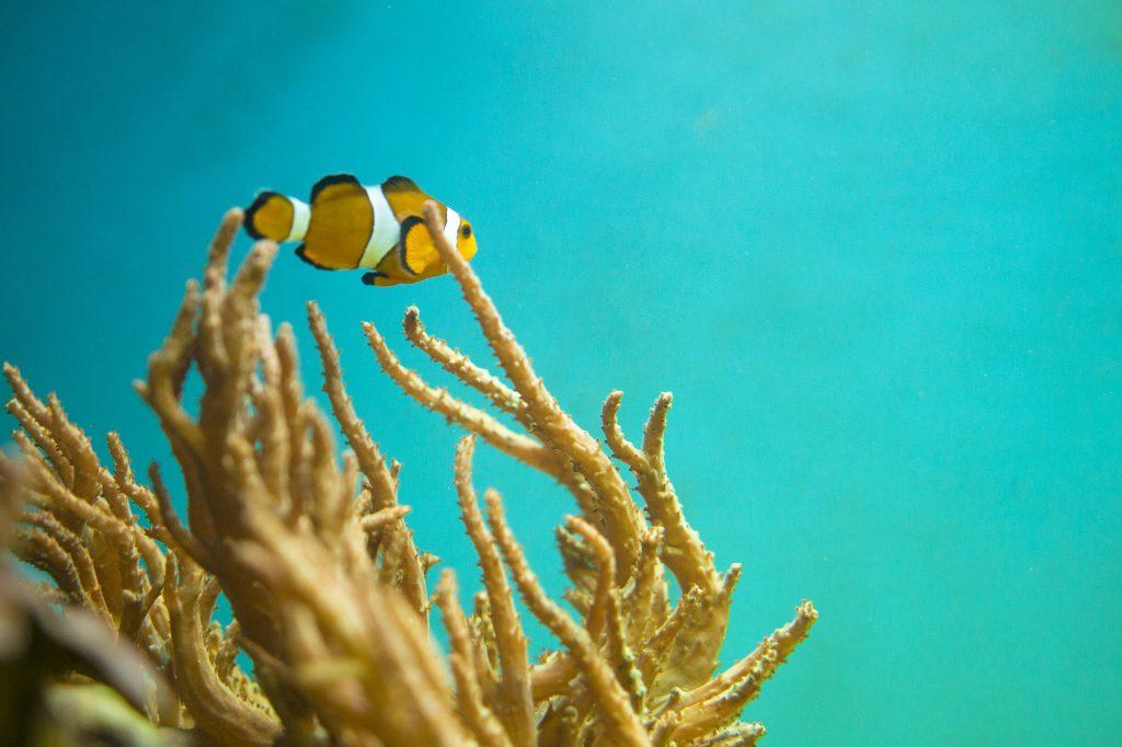pez, payaso, nemo, anémona, acuario, 1712161214