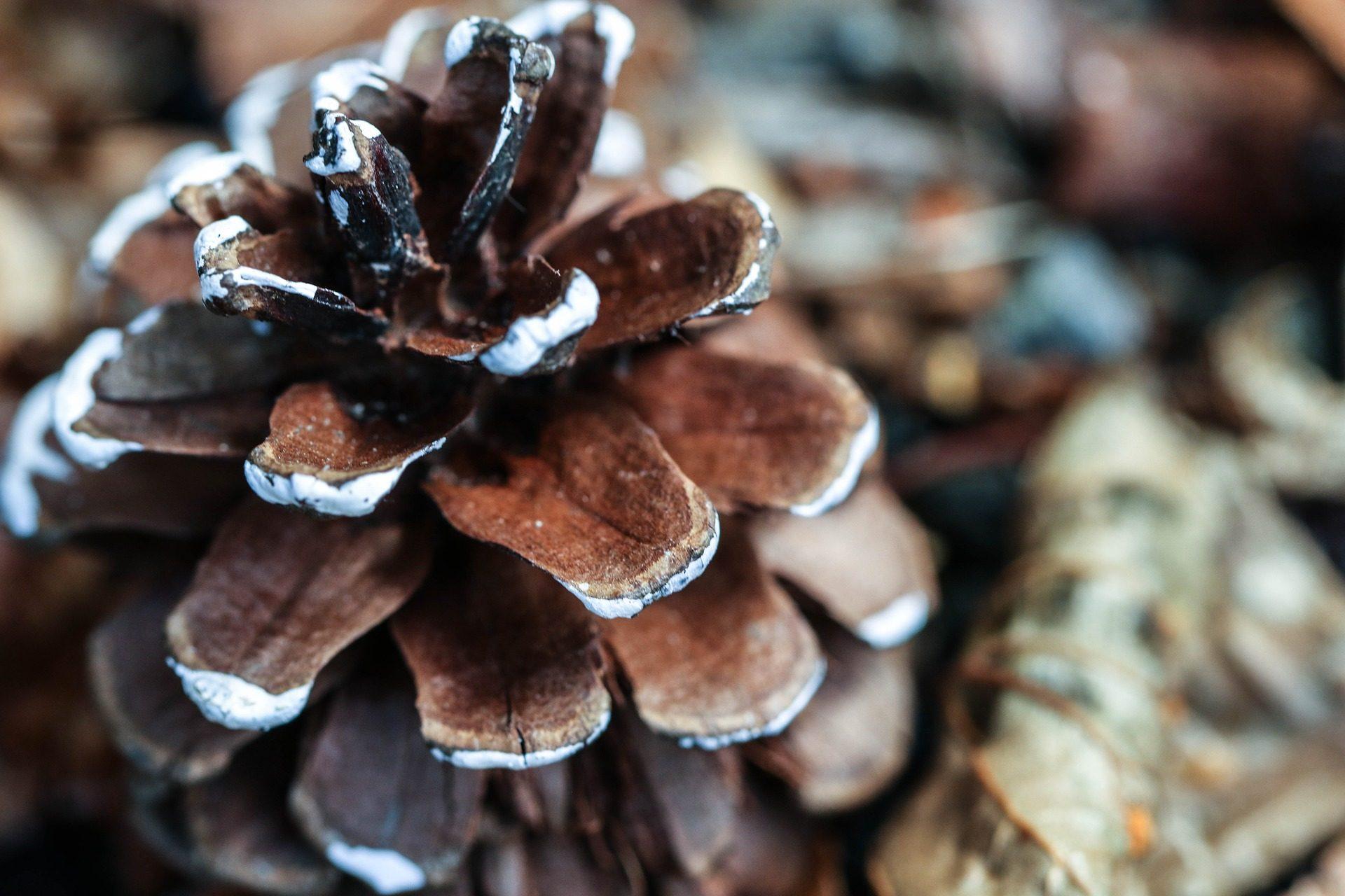 Ananas, Shell, corteccia, legno, circa - Sfondi HD - Professor-falken.com