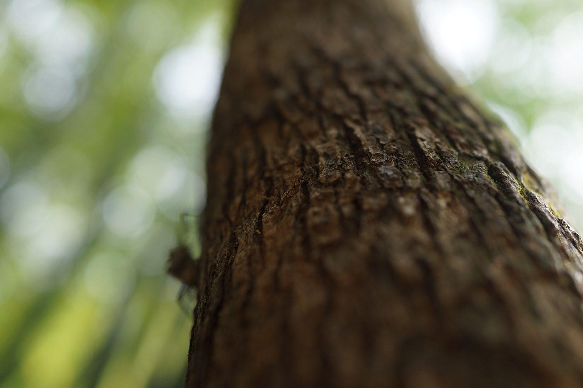 ट्रंक, पेड़, छाल, वन, के बारे में - HD वॉलपेपर - प्रोफेसर-falken.com