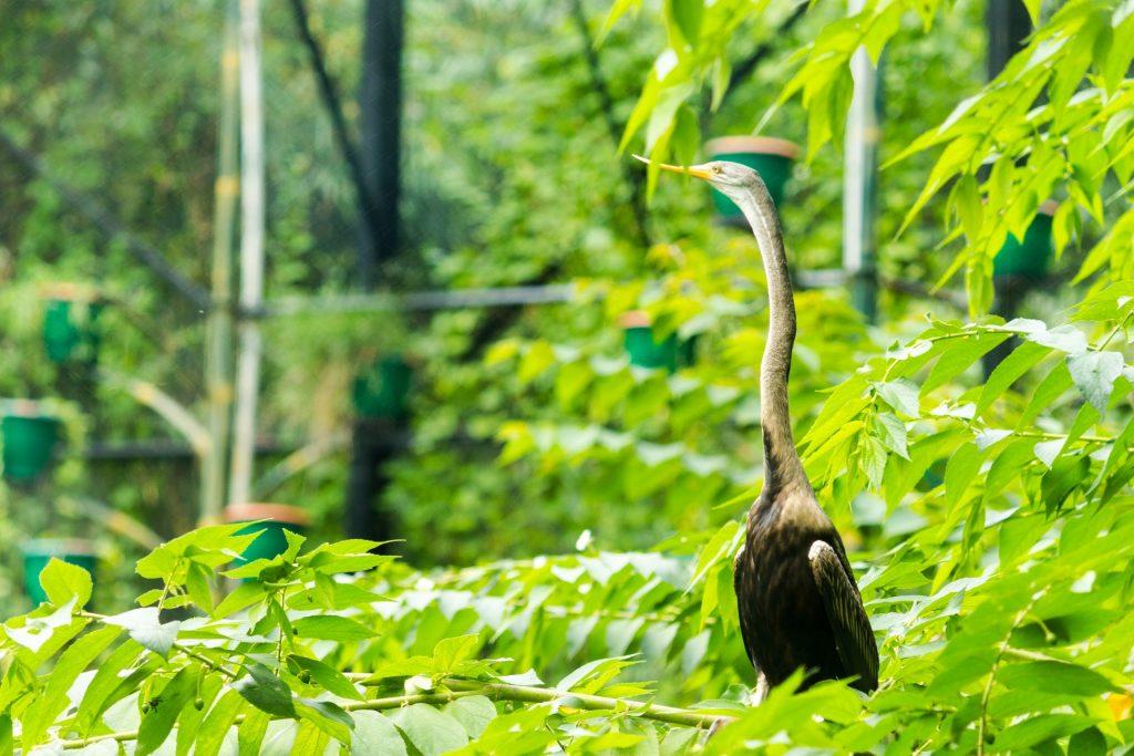 大道, 鸟, 颈部, 丛林, 植被, 1801180816