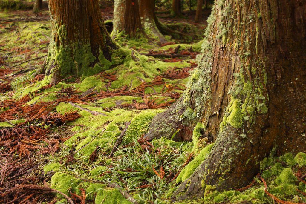 bosque, árboles, troncos, musgos, humedad, 1801132249