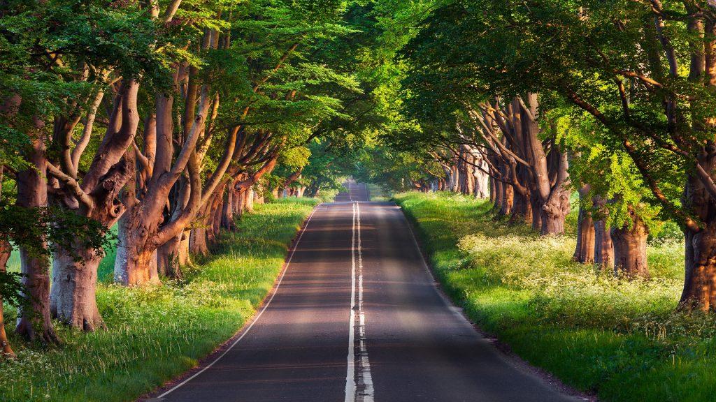 carretera, camino, árboles, bosque, vegetación, 1801120846
