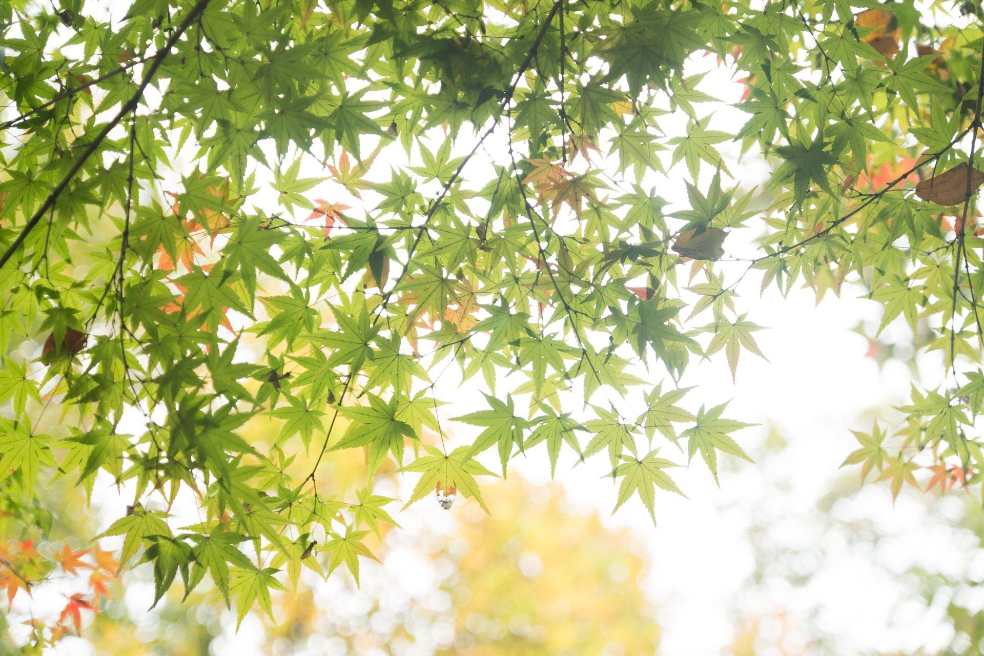 树, 分支机构, 叶子, 晕, 光, 太阳 - 高清壁纸 - 教授-falken.com