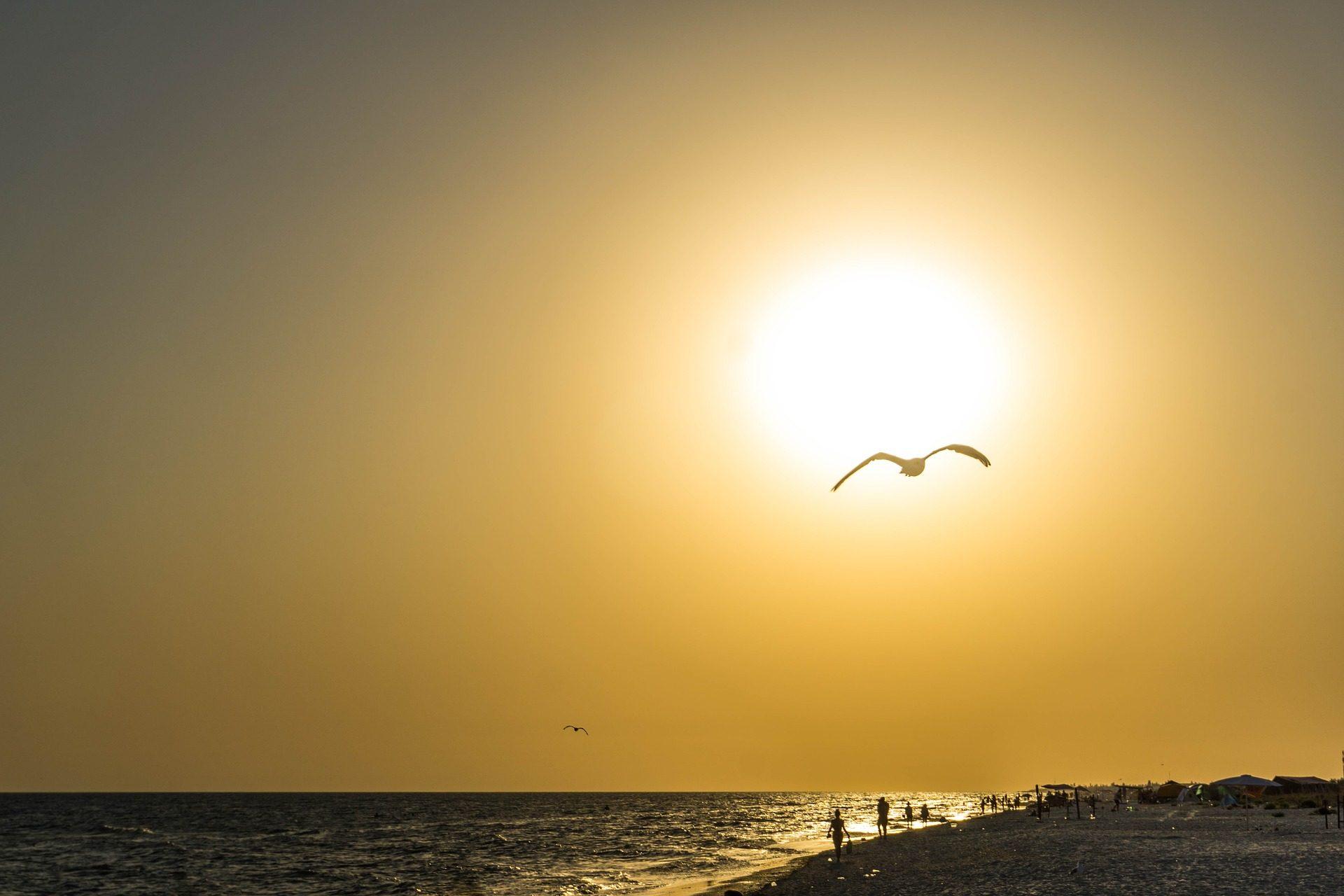 サンセット, 太陽, ビーチ, 海, シーガル, シルエット - HD の壁紙 - 教授-falken.com