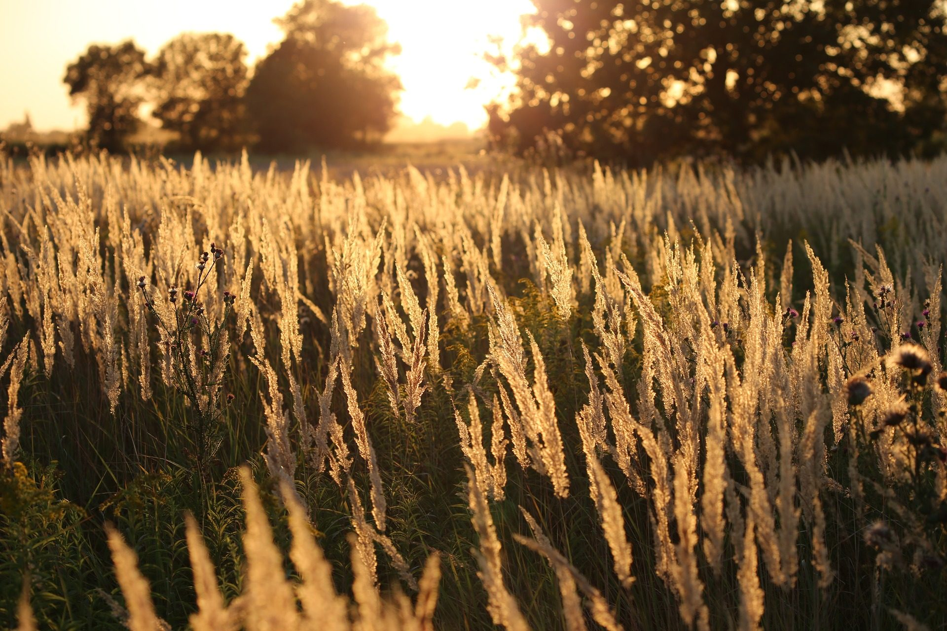campo, grama, plantas, Pôr do sol, luz, Sol, árvores - Papéis de parede HD - Professor-falken.com