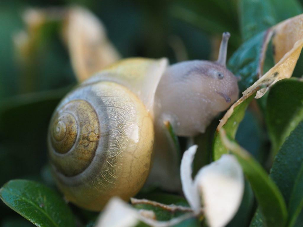caracol, concha, cuernos, hoja, planta, molusco, de cerca, 1802231837
