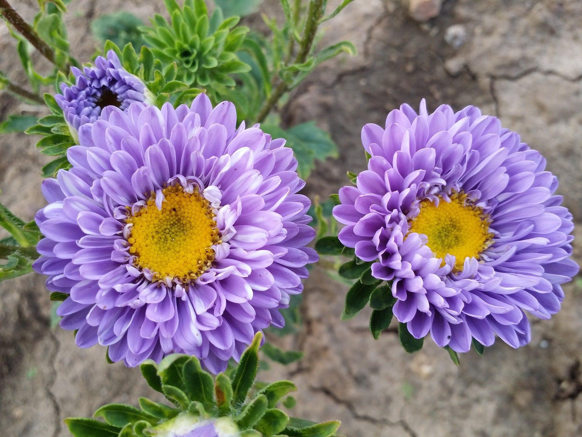 الزهور, تلات, الكمية, أرجواني, الميدان, حديقة - خلفيات عالية الدقة - أستاذ falken.com