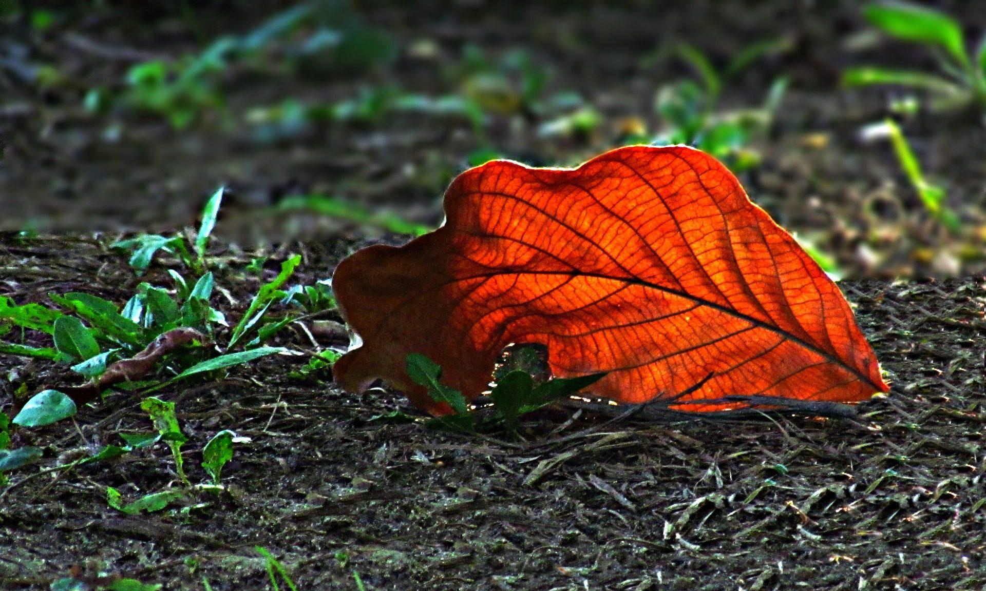 folha, folhas caídas, campo, grama, Terra, Outono - Papéis de parede HD - Professor-falken.com