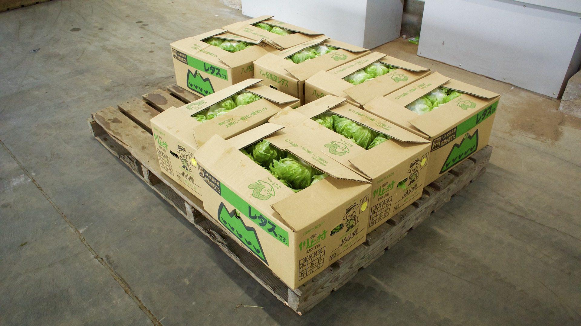 Салат, овощи, ящики, cartón, поддон - Обои HD - Профессор falken.com
