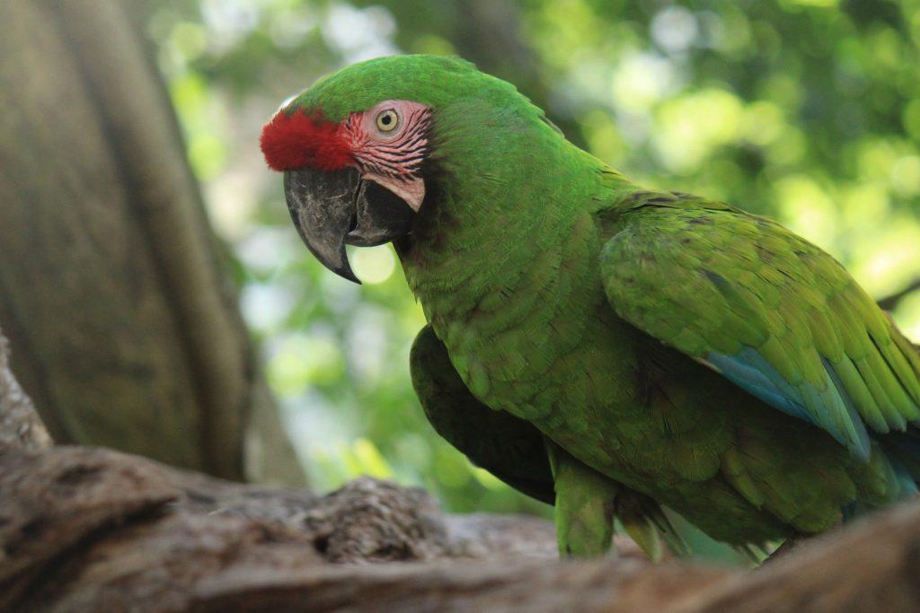 loro, cacatua, ave, pájaro, plumaje, colorido, pico, 1802082025