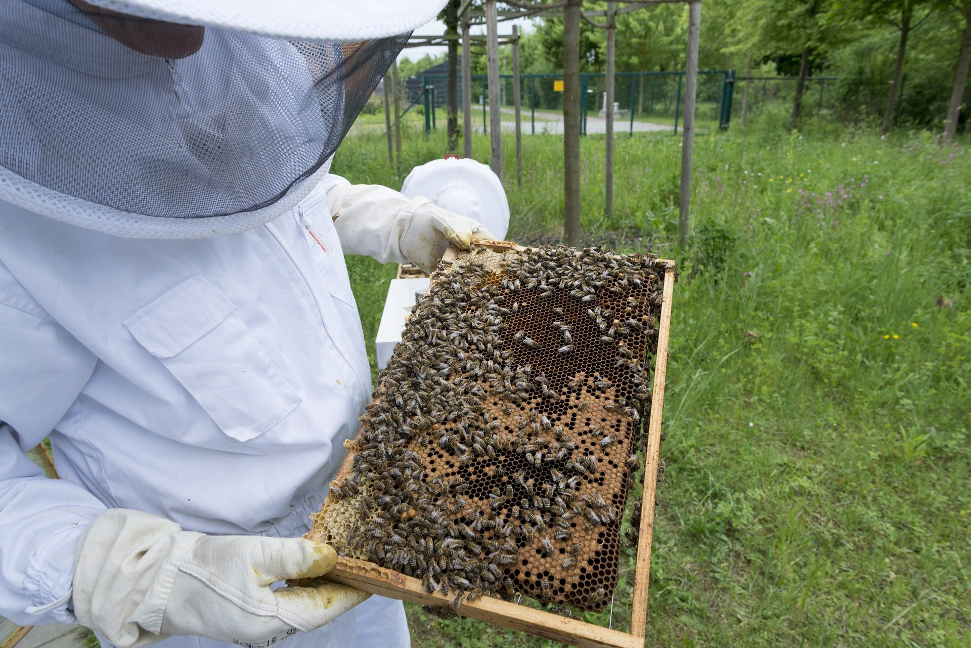 Groupe d'experts, abeilles, apiculteur, miel, ruche - Fonds d'écran HD - Professor-falken.com
