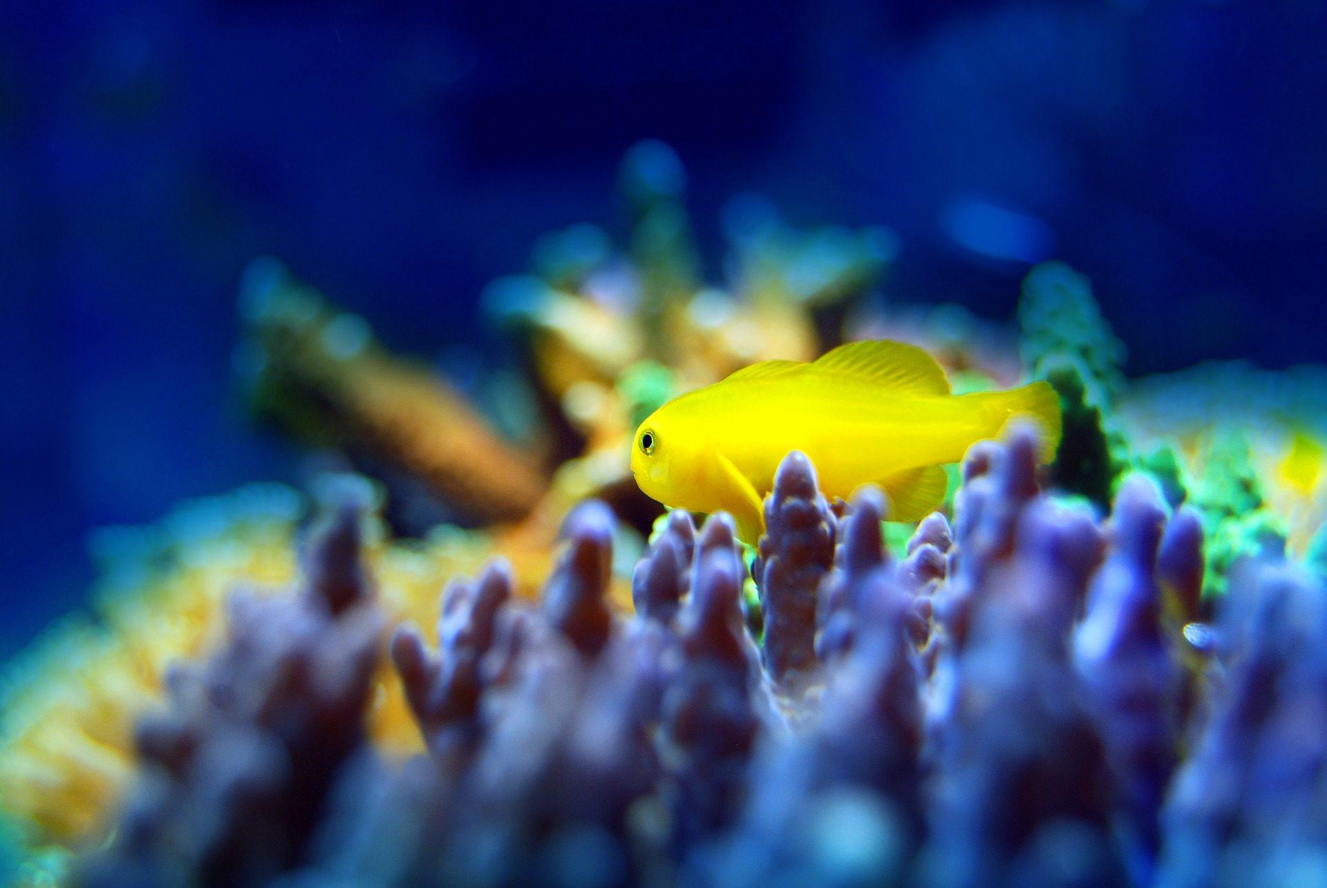 Fisch, Koralle, Arrecife, bunte, Aquarium - Wallpaper HD - Prof.-falken.com