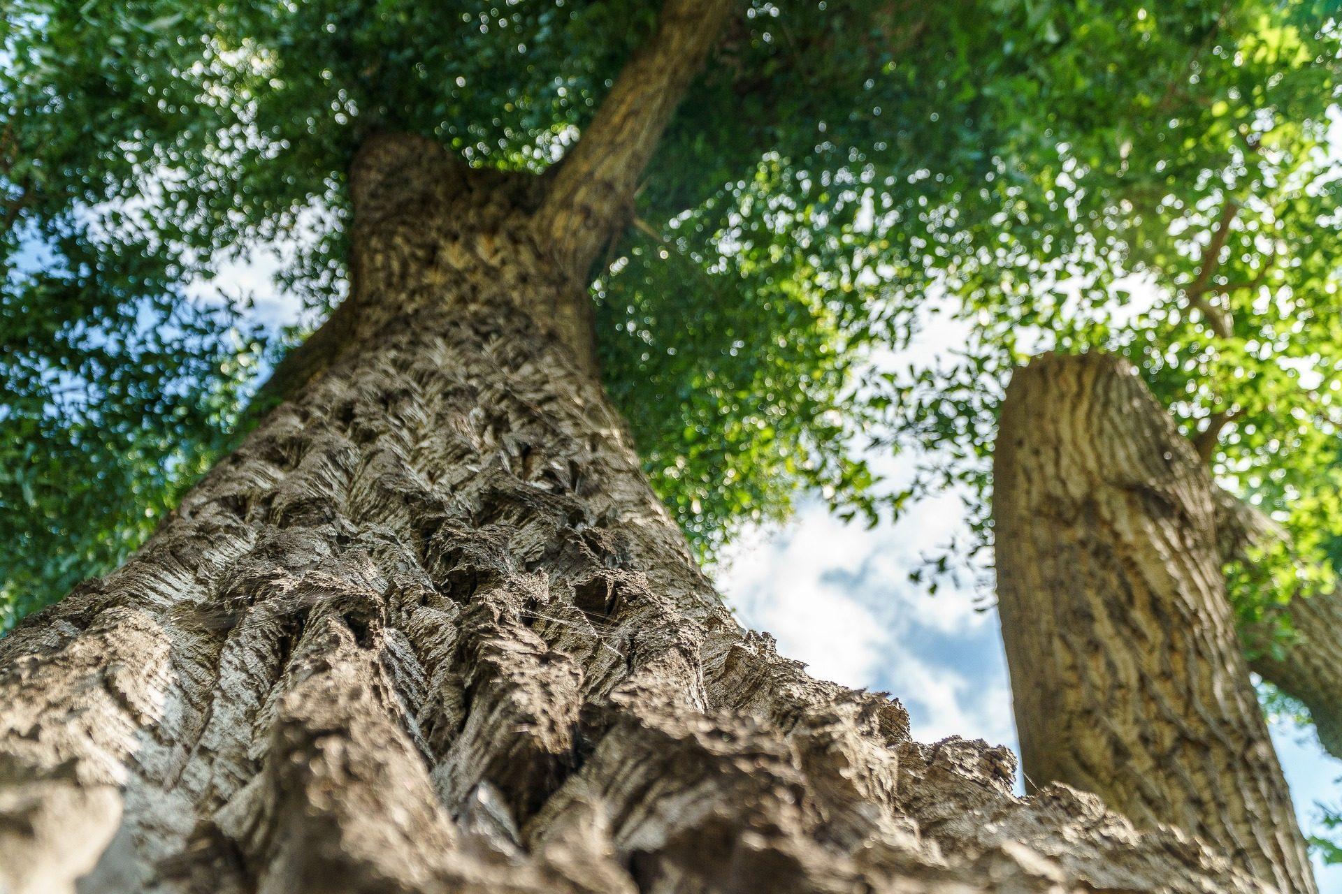 Chêne, arbre, tronc, branches, écorce - Fonds d'écran HD - Professor-falken.com