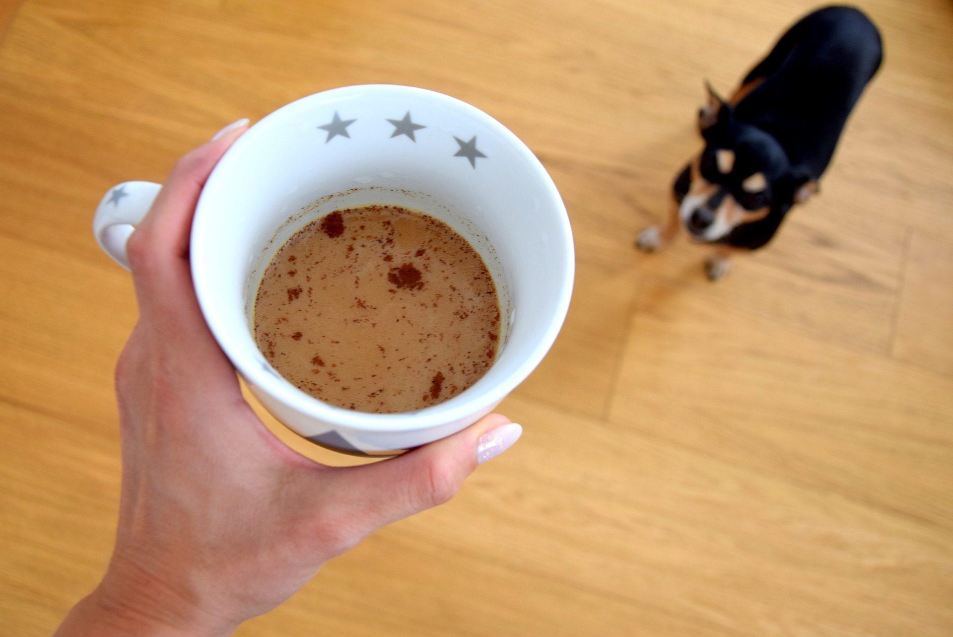 カップ, コーヒー, つ星, 犬, ペット - HD の壁紙 - 教授-falken.com