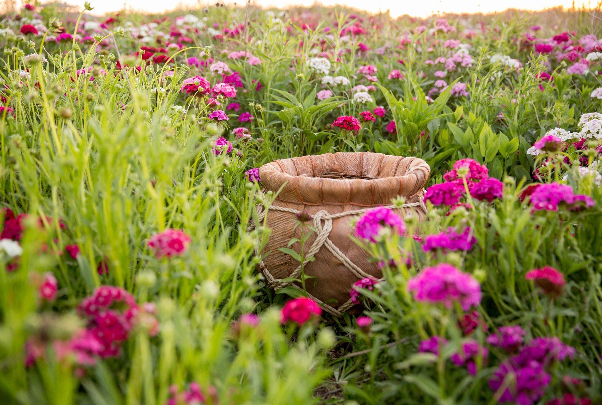 σκάφος, Μπολ, πεδίο, λουλούδια, Κήπος, πολύχρωμο - Wallpapers HD - Professor-falken.com
