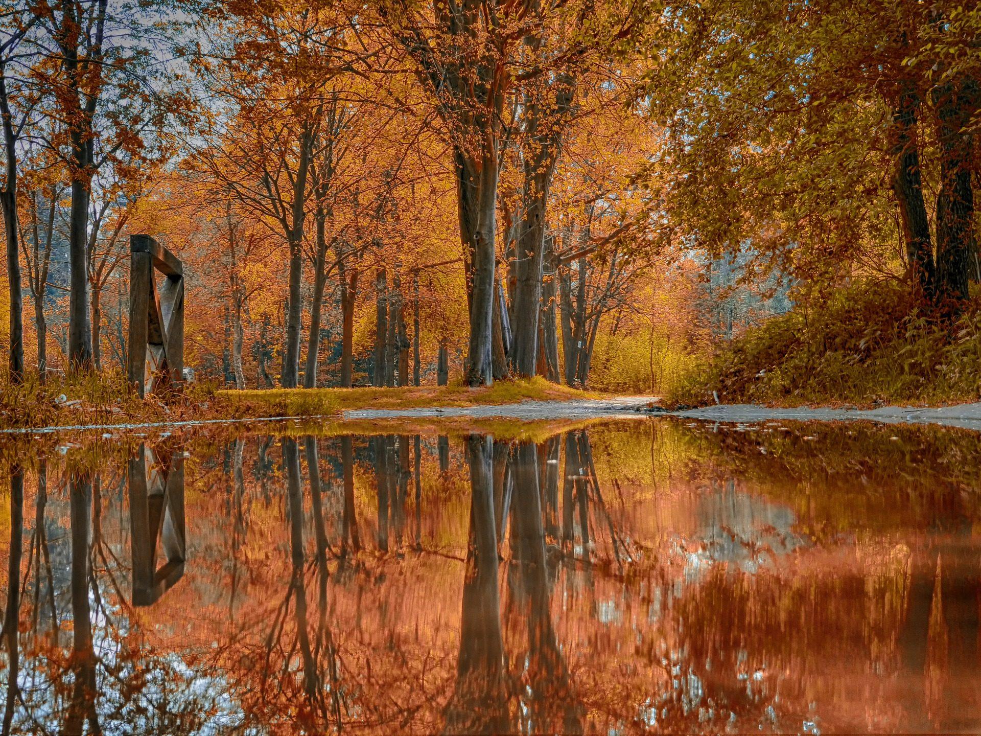 arbres, Forest, Rivière, Lake, réflexion, automne - Fonds d'écran HD - Professor-falken.com