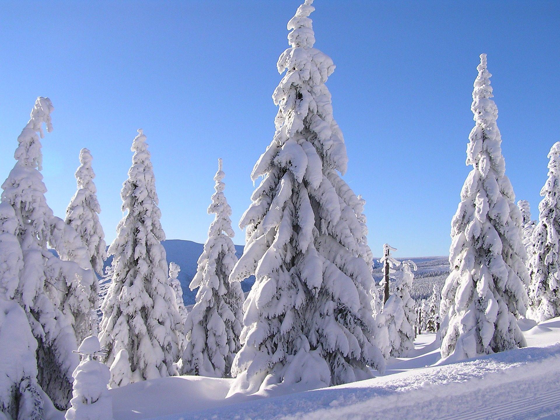 树木, 白雪皑皑, 雪, 松树, 冷杉 - 高清壁纸 - 教授-falken.com