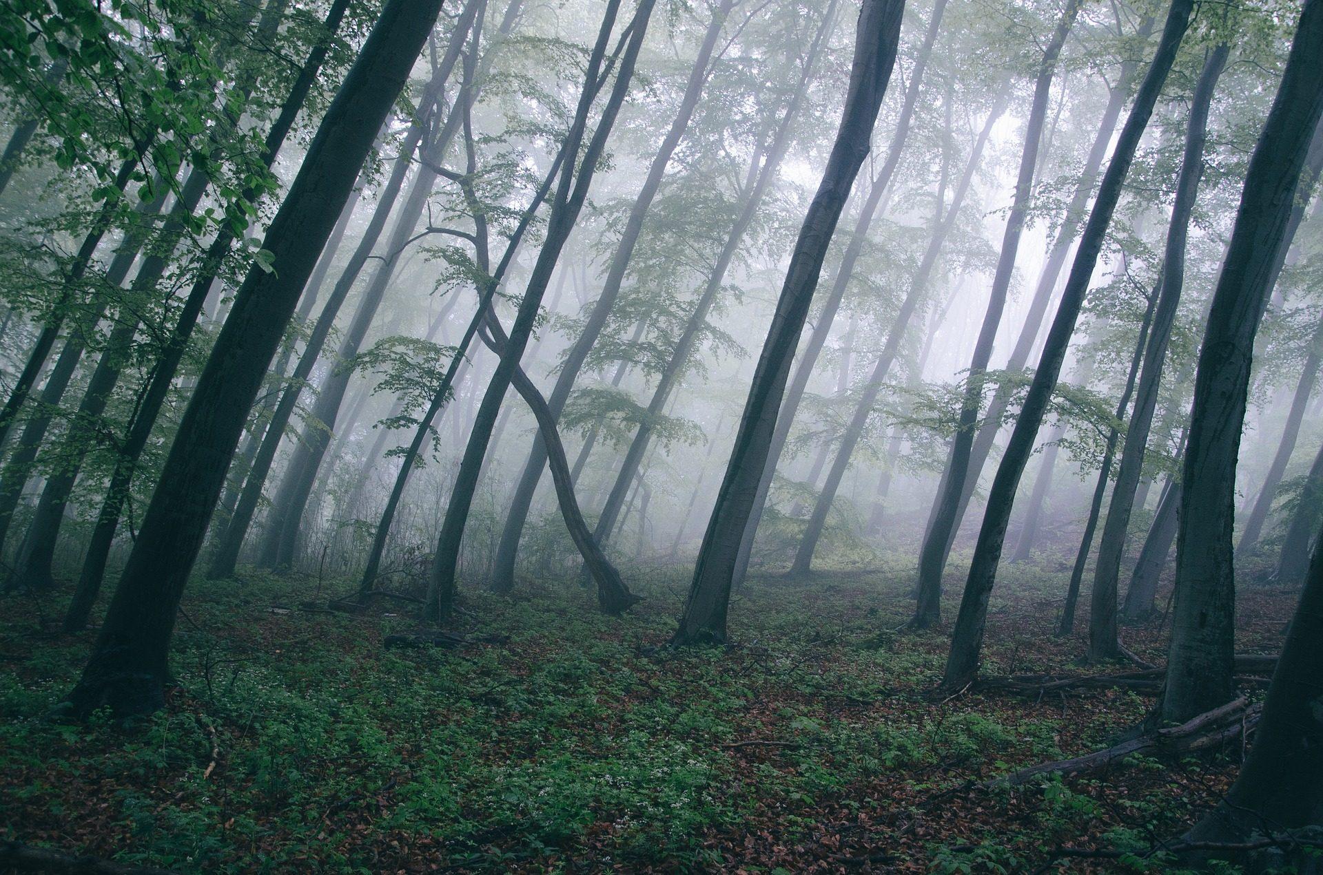 森林, 树木, 倾向, 弯曲, 雾, 索莱达 - 高清壁纸 - 教授-falken.com