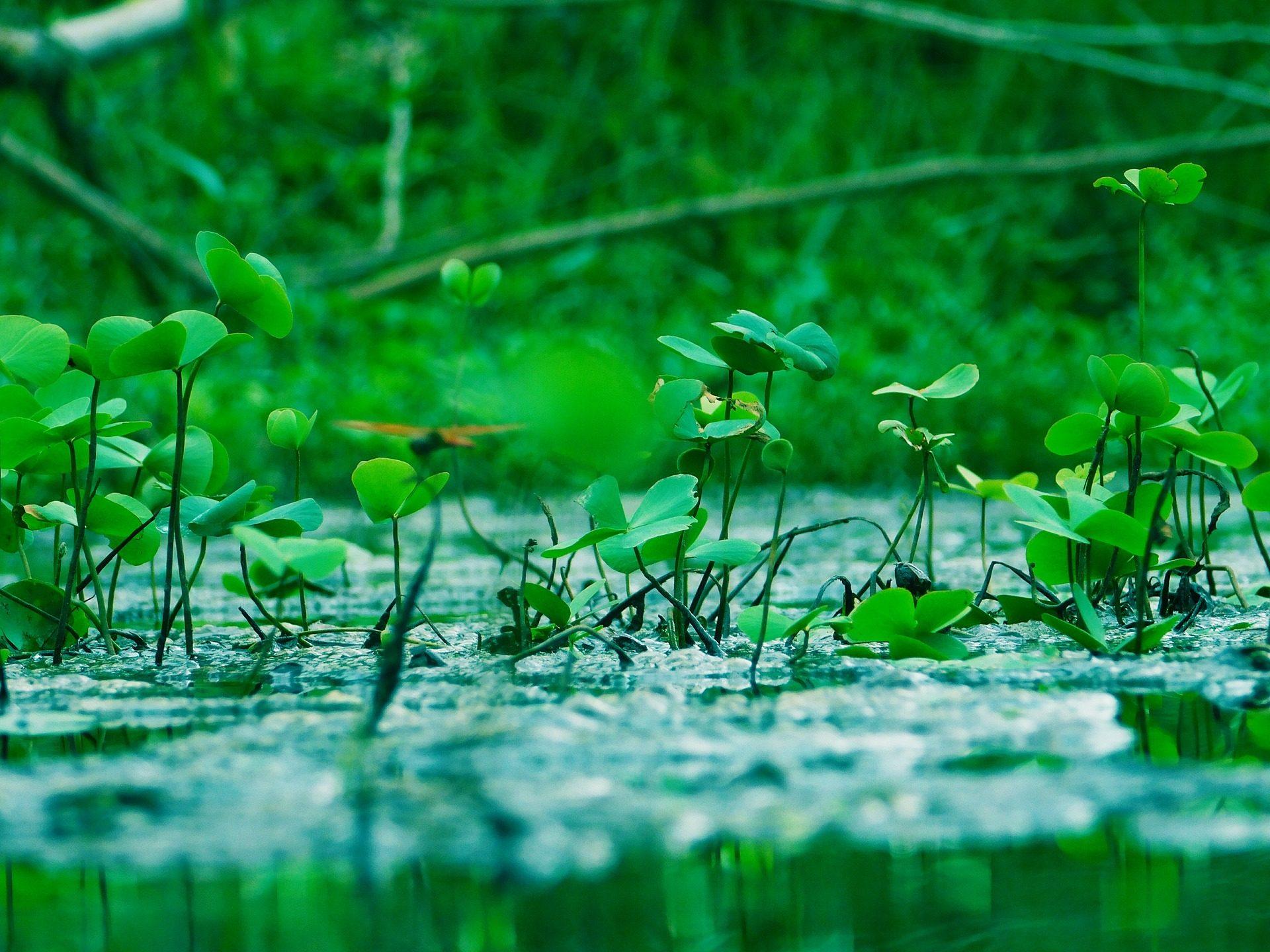 вспышки, листья, растения, Рио, Лагуна, воды - Обои HD - Профессор falken.com