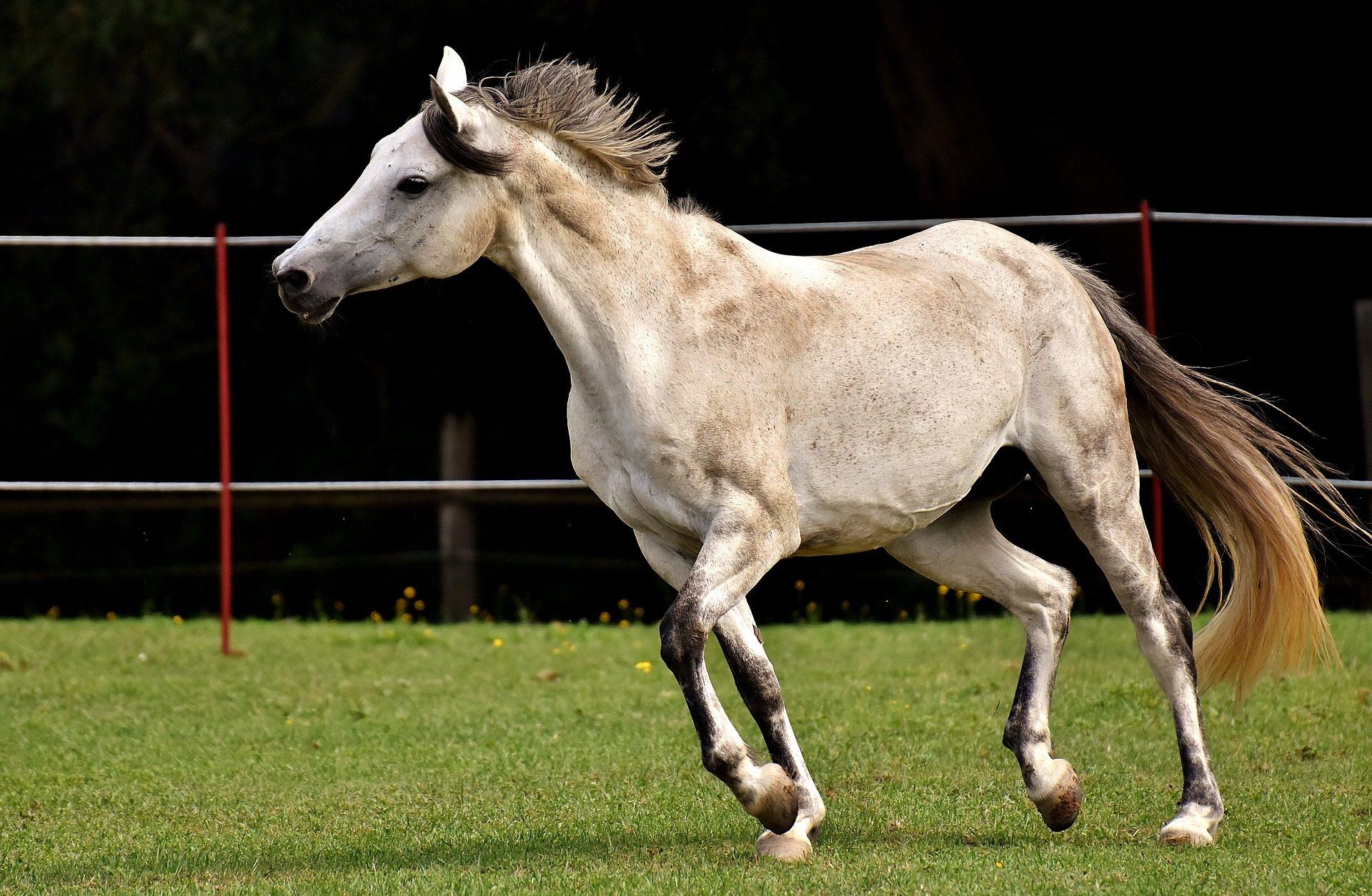 حصان, جالوب, خبب, التدريب, المرج, العشب - خلفيات عالية الدقة - أستاذ falken.com