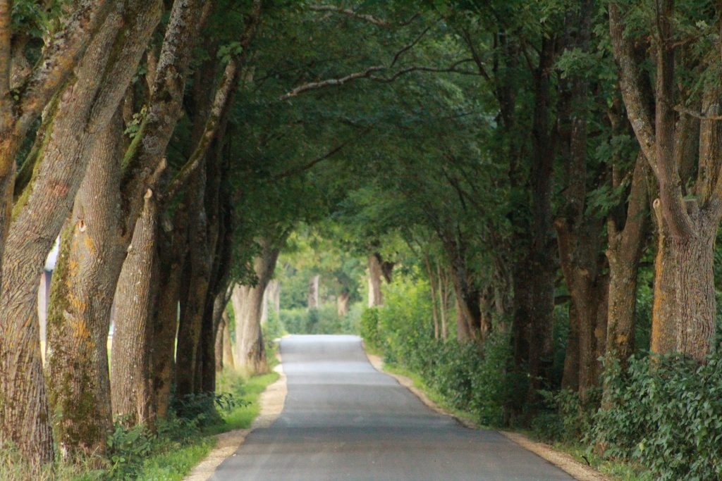 carretera, Route, passage, arbres, mauvaises herbes, Vegetación, 1803221140