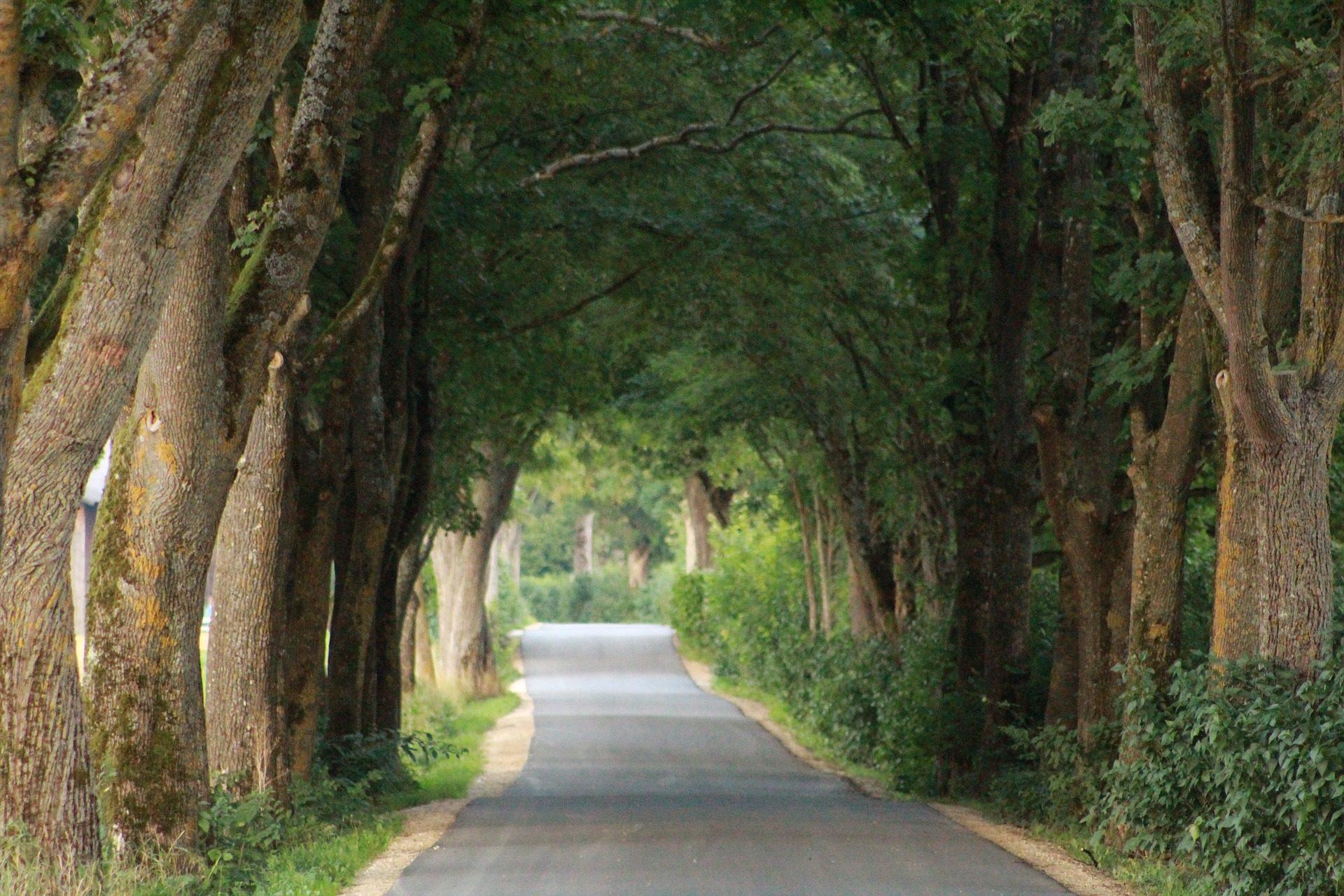 carretera, Δρόμου, πέρασμα, δέντρα, ζιζανίων, βλάστηση - Wallpapers HD - Professor-falken.com