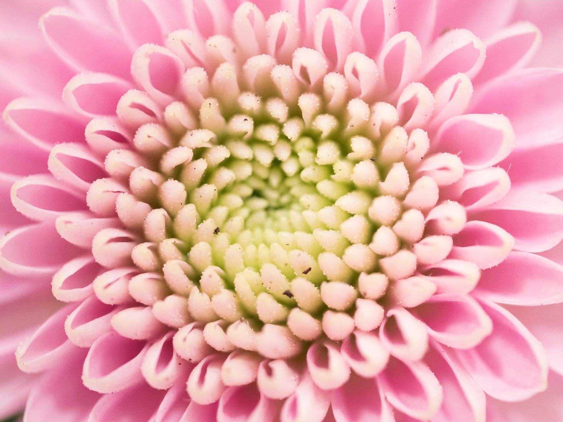फूल, पंखुड़ियों, ज्यामिति, प्रशिक्षण, रंगीन, के बारे में - HD वॉलपेपर - प्रोफेसर-falken.com