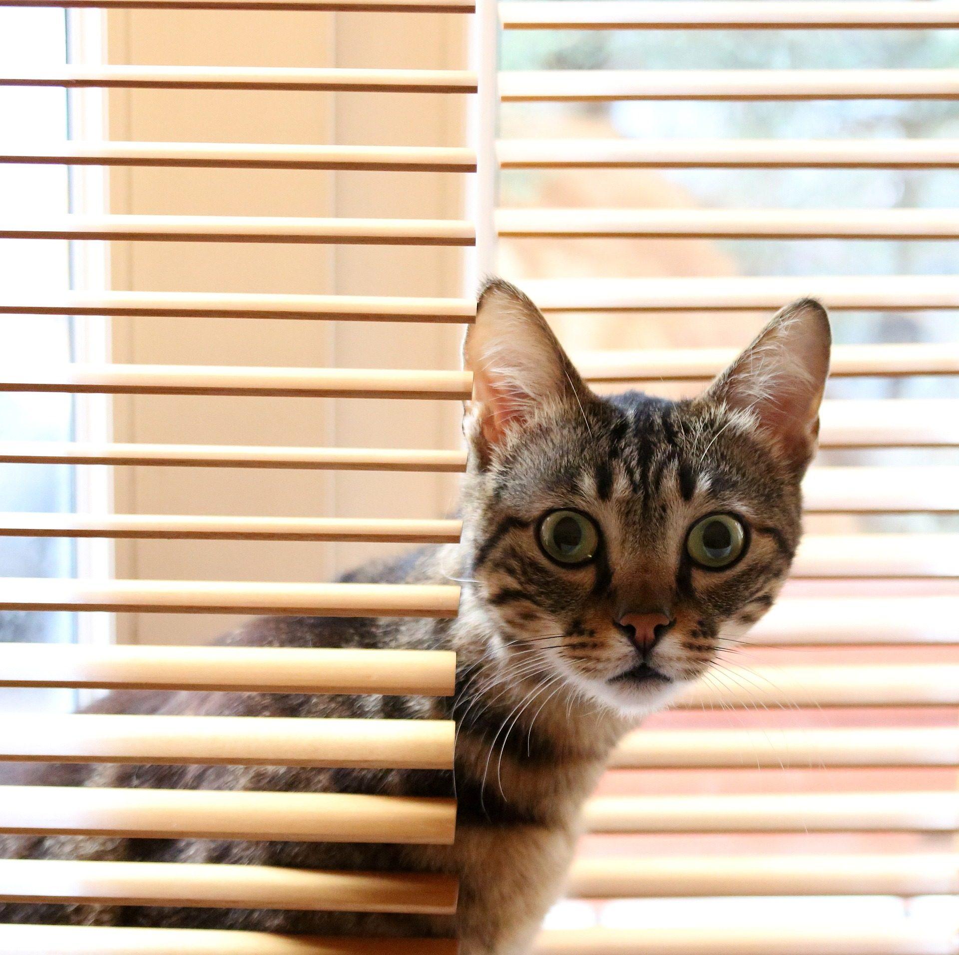 gatto, felino, persiana, finestra, sguardo, stupore - Sfondi HD - Professor-falken.com