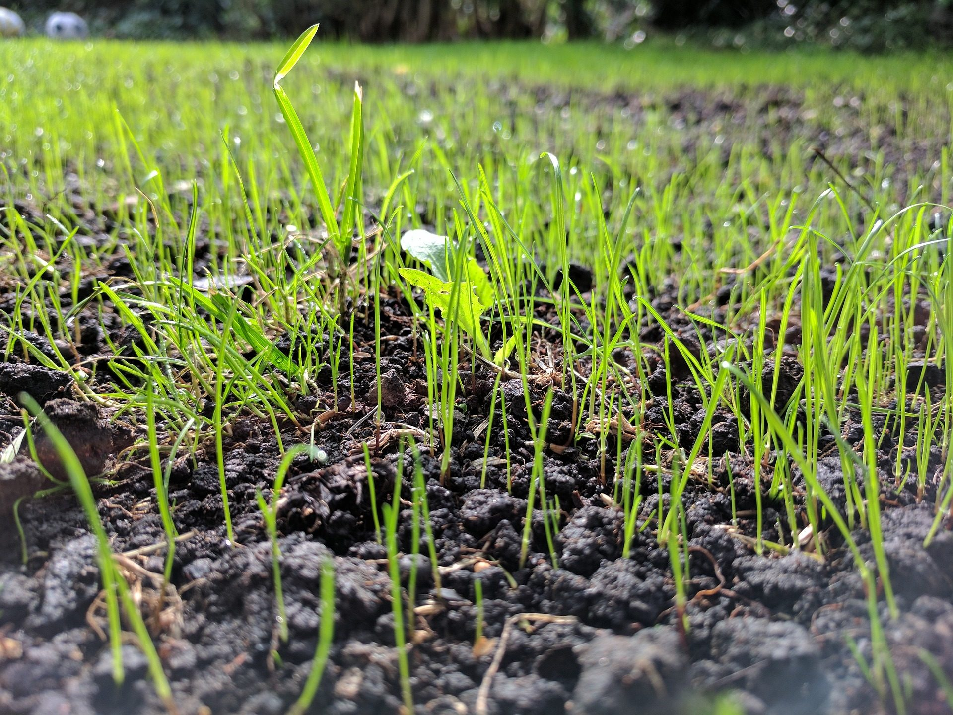 घास, प्रकोपों, लॉन, पृथ्वी, के बारे में - HD वॉलपेपर - प्रोफेसर-falken.com
