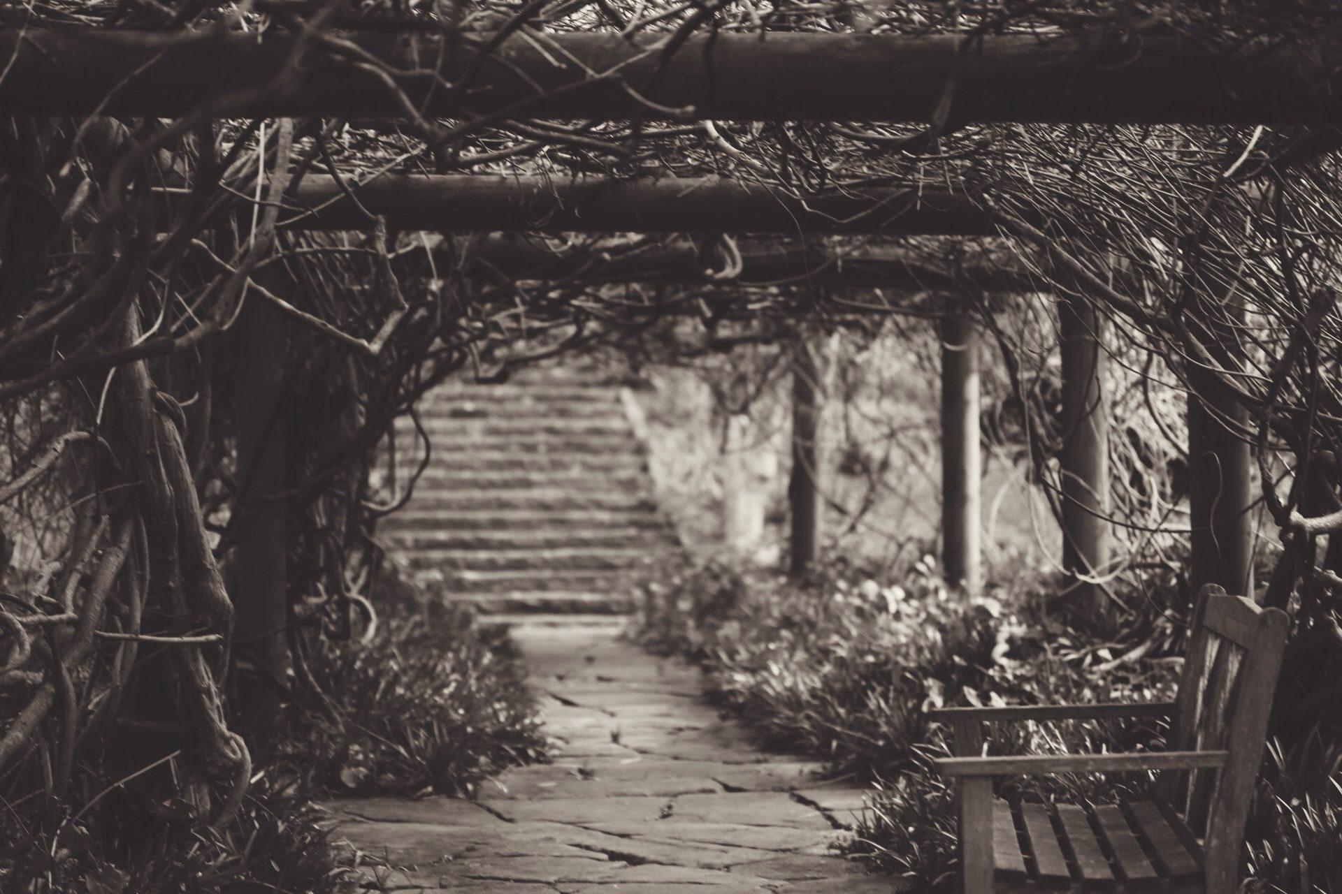 Garten, Park, Fahrt, Sitz, in schwarz und weiß - Wallpaper HD - Prof.-falken.com