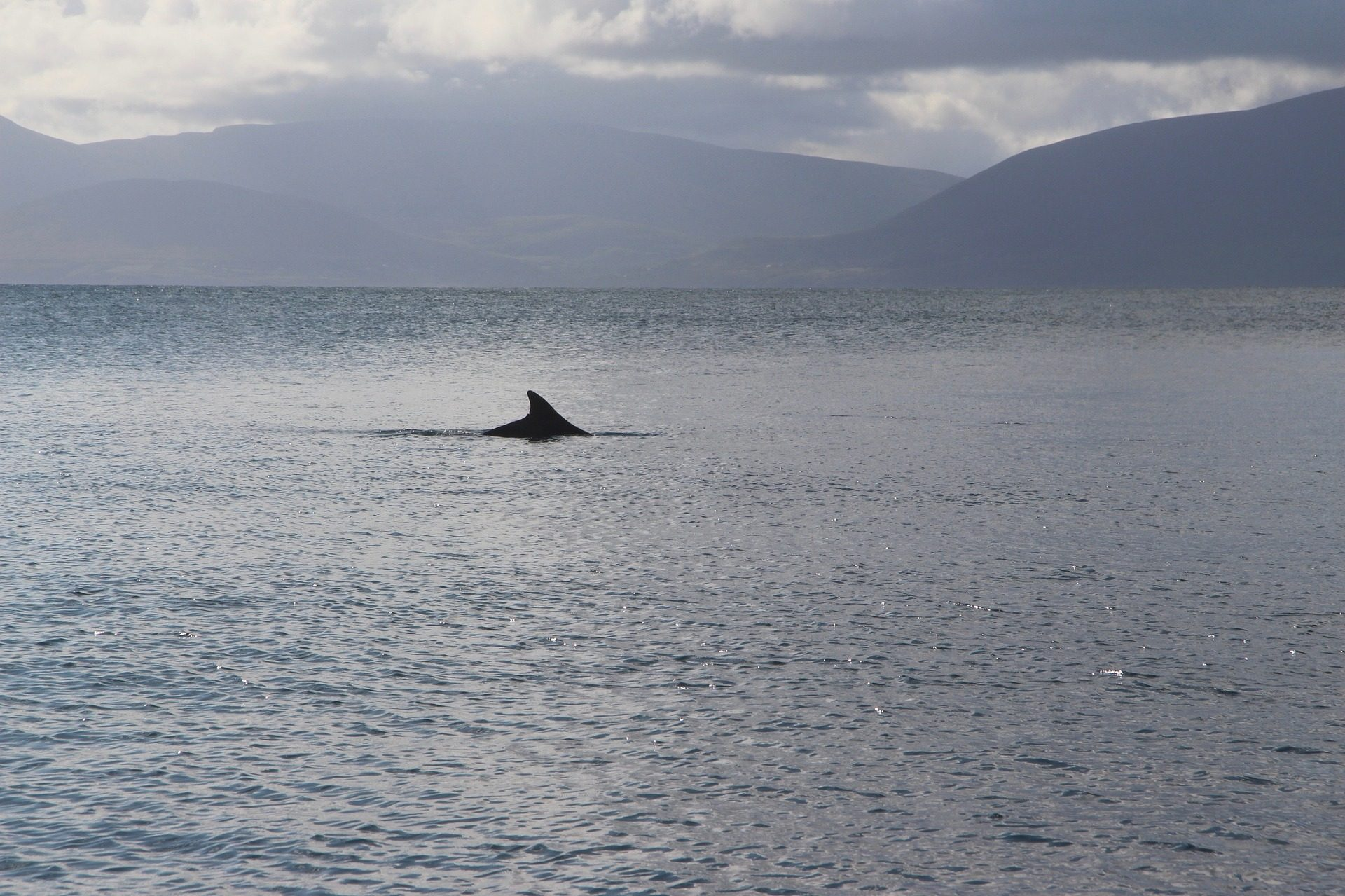 Mer, Montañas, eau, fin, Dauphin, Irlande - Fonds d'écran HD - Professor-falken.com