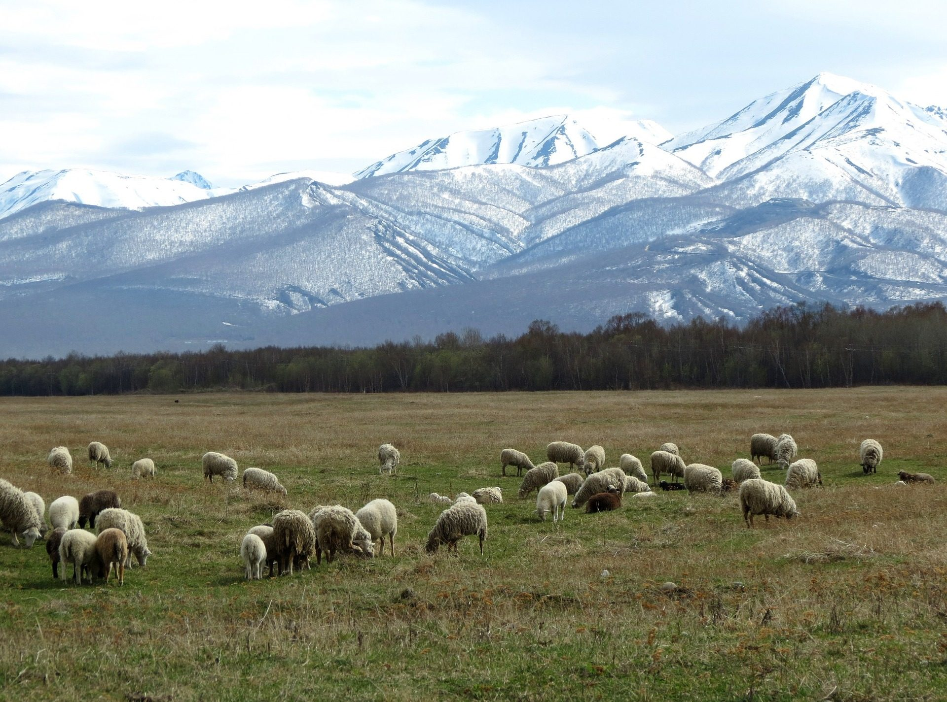 Troupeau, moutons, pâturage, Montañas, chute de neige - Fonds d'écran HD - Professor-falken.com