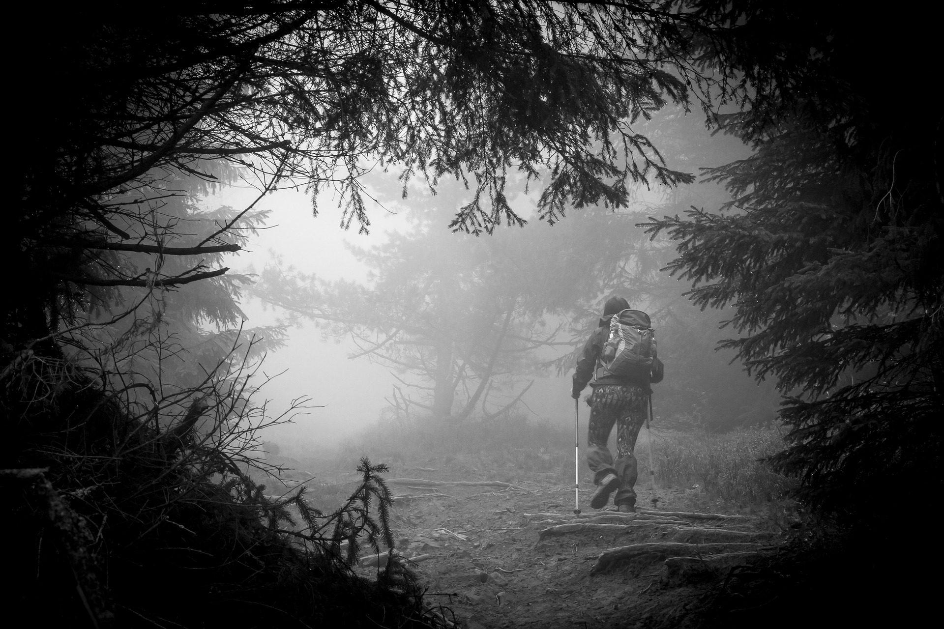 alpinista, floresta, nevoeiro, escuridão, em preto e branco - Papéis de parede HD - Professor-falken.com