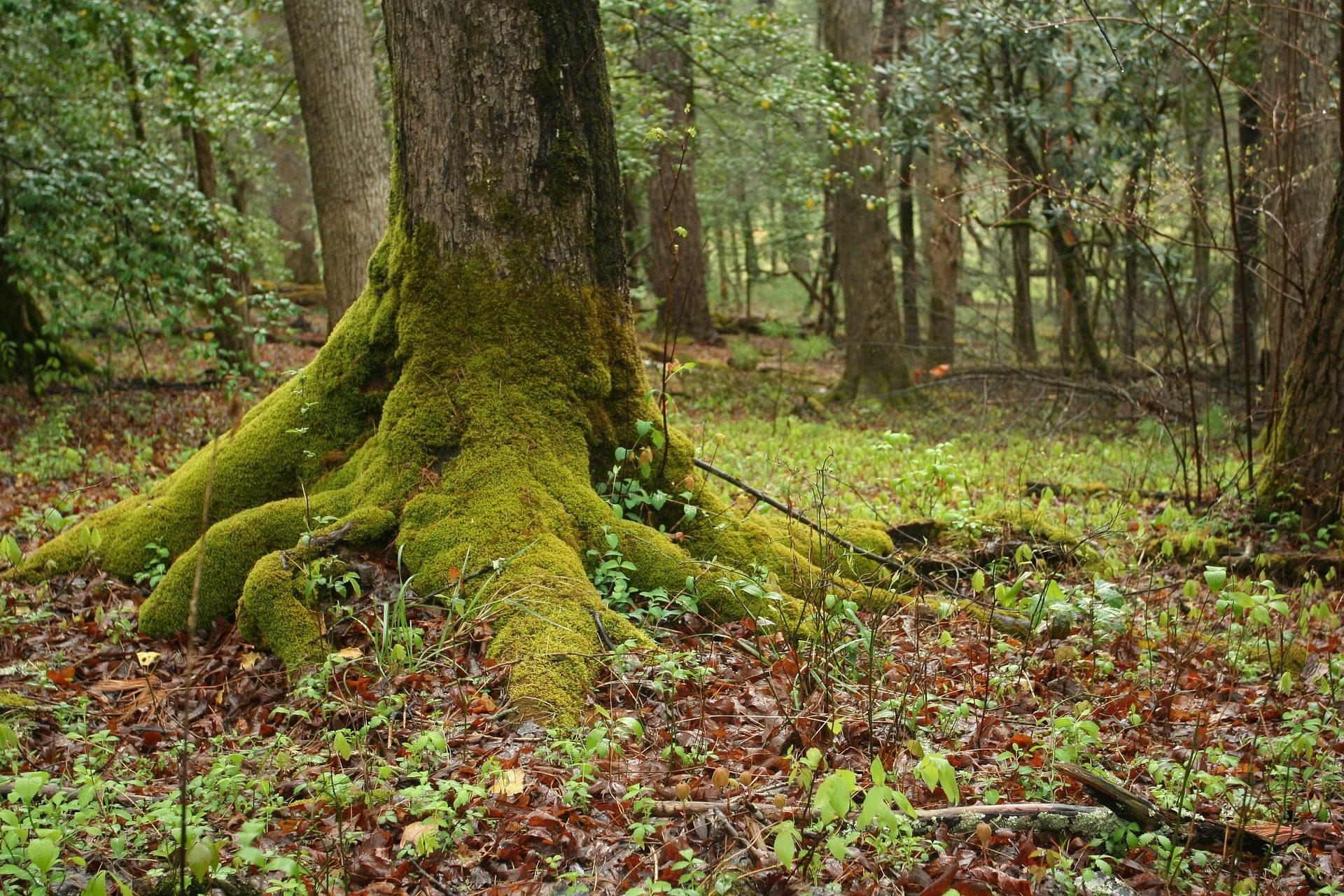 árvores, floresta, Raíces, MUSGO, vegetación, umidade - Papéis de parede HD - Professor-falken.com