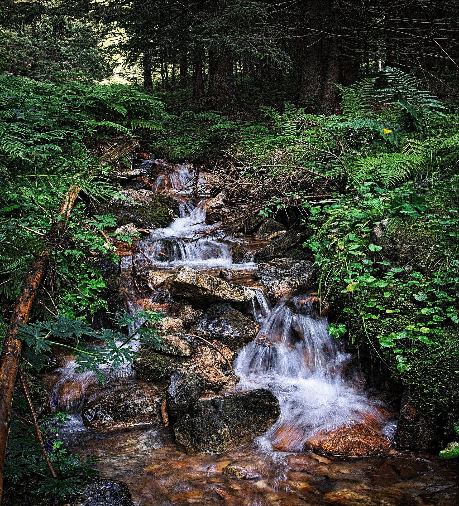 ब्रूक, नदी, पानी, वसंत, वनस्पति, वन - HD वॉलपेपर - प्रोफेसर-falken.com
