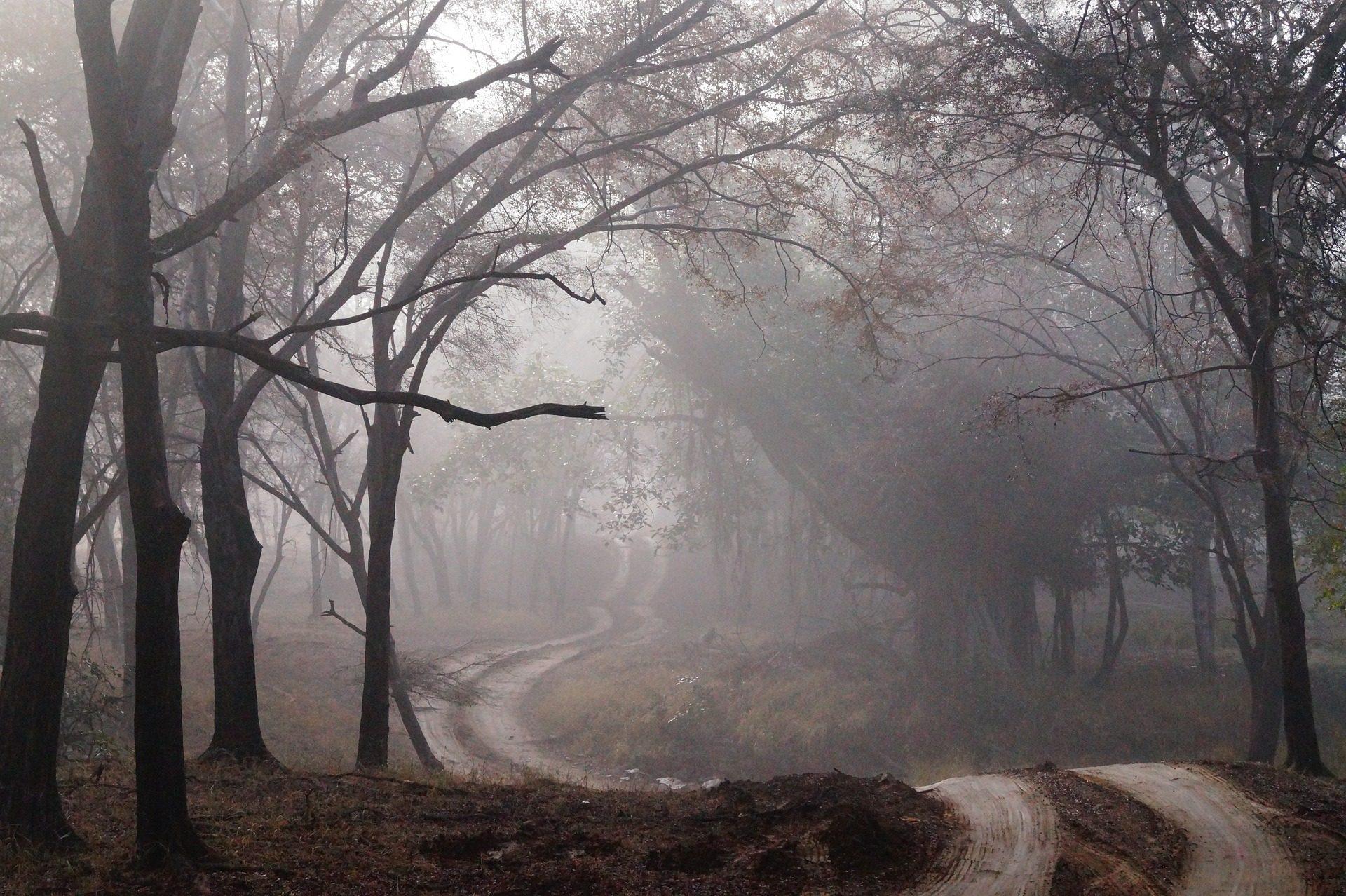 Дорога, лес, мрачный, туман, деревья, Темный - Обои HD - Профессор falken.com
