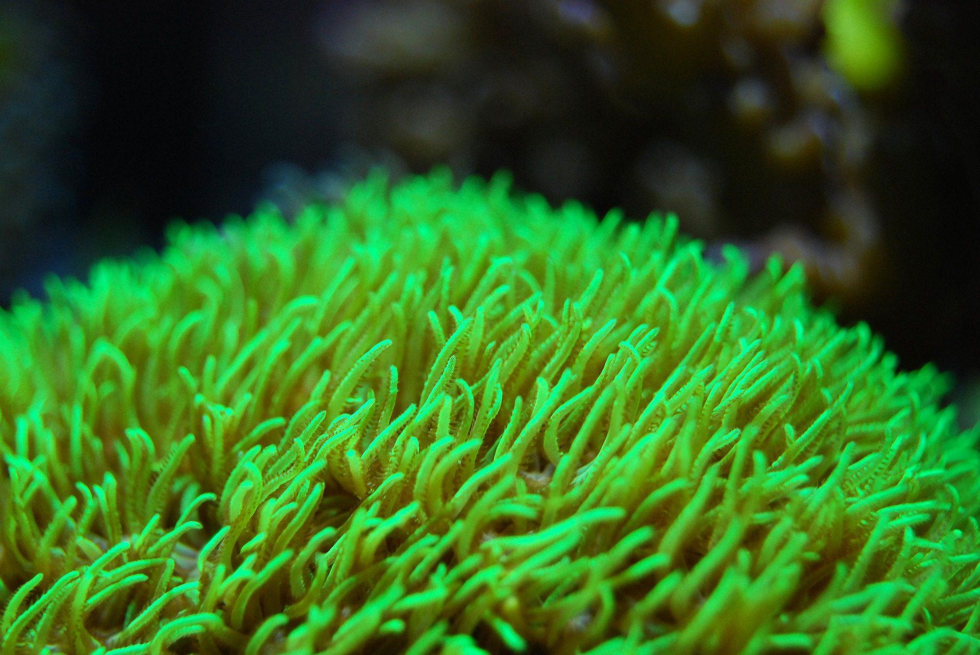 珊瑚, 群礁, 海, océano, 海洋 - 高清壁纸 - 教授-falken.com