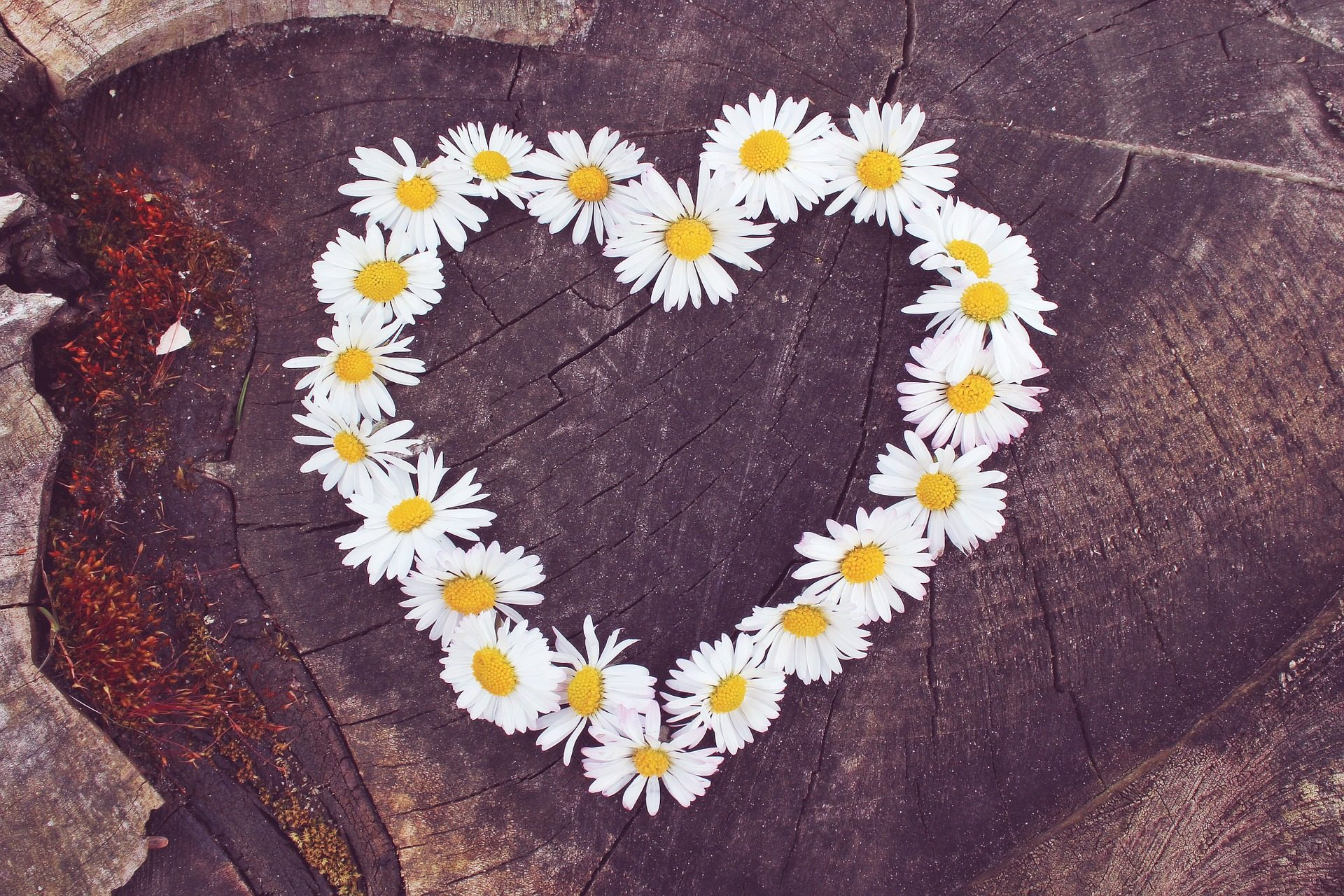 cuore, fiori, tronco, legno, Margarita - Sfondi HD - Professor-falken.com
