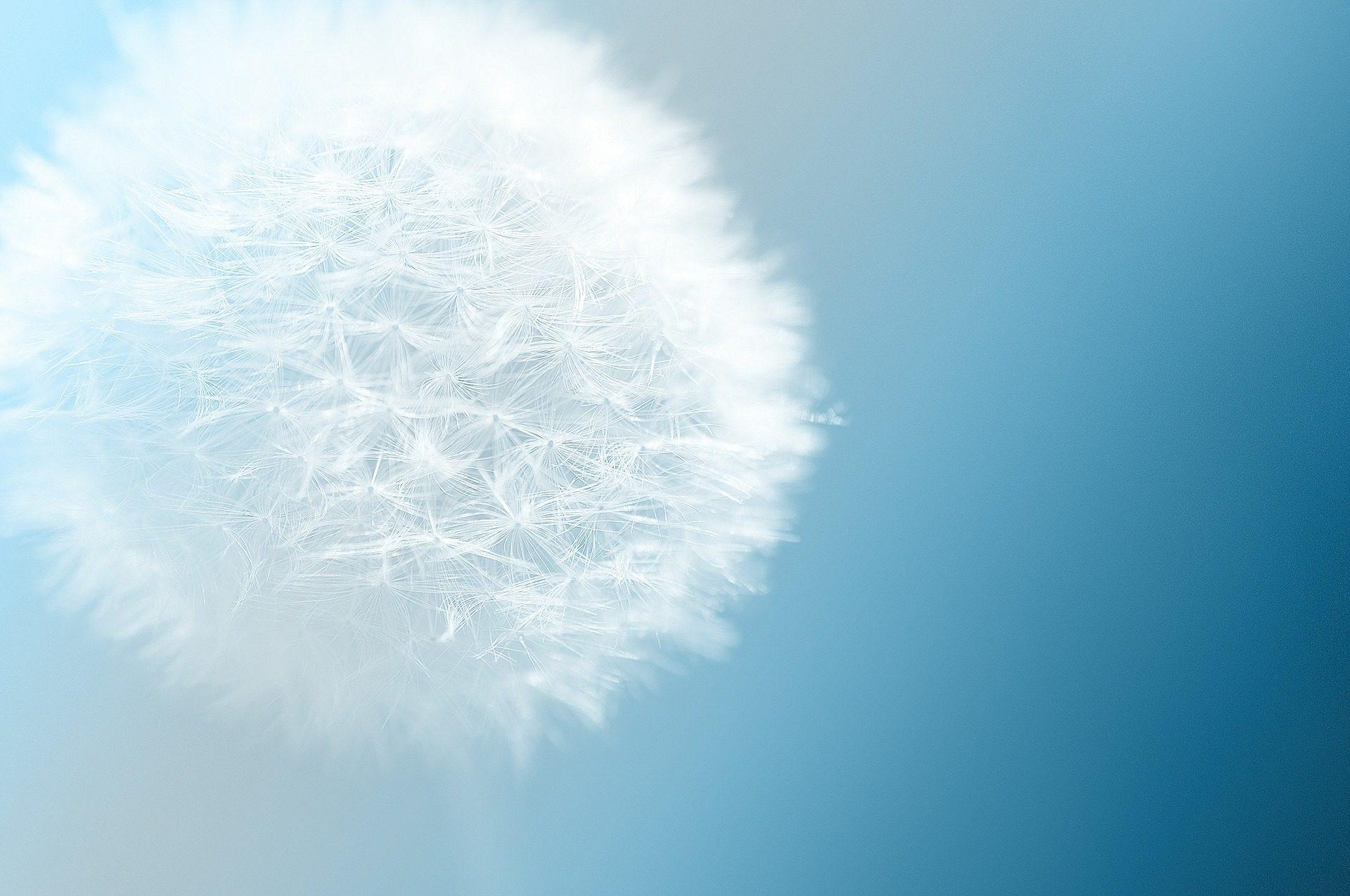 Pissenlit, rez de chaussée, graines, fleur, Sky, Bleu - Fonds d'écran HD - Professor-falken.com