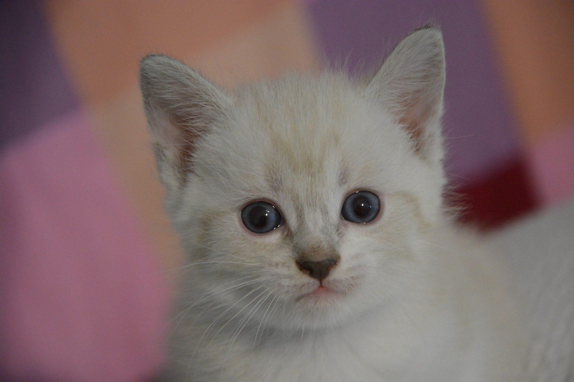 gato, minino, cría, peles, olhos, felino - Papéis de parede HD - Professor-falken.com