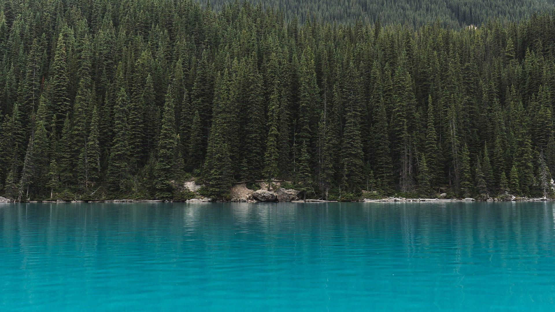 湖, 绿松石, 树木, 松树, 森林 - 高清壁纸 - 教授-falken.com
