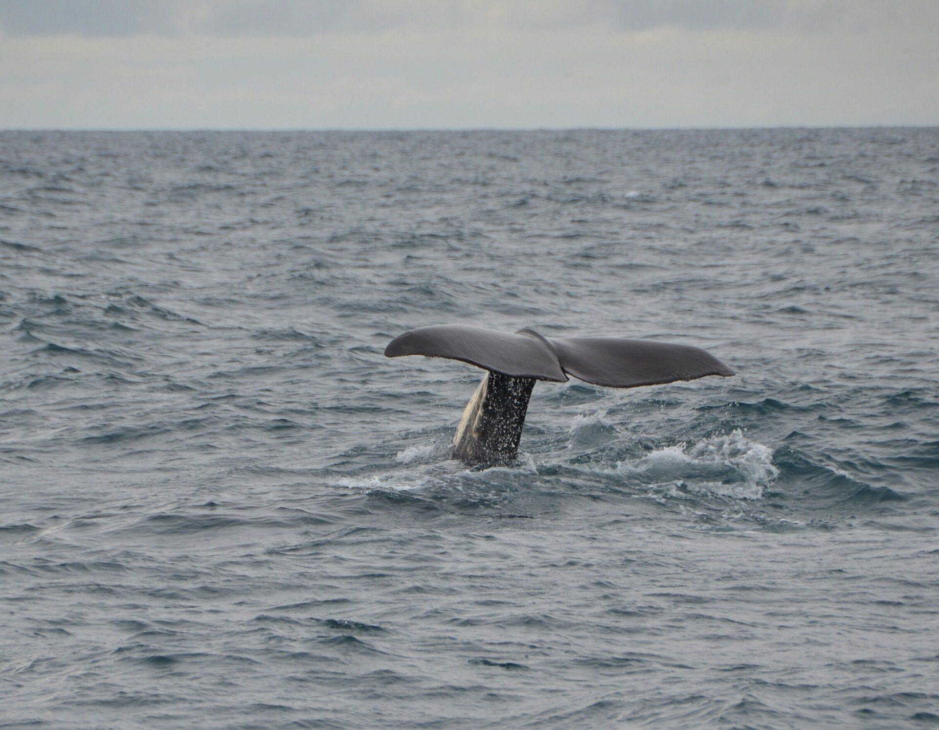 mar, 海, クジラ, 尾, フィン - HD の壁紙 - 教授-falken.com