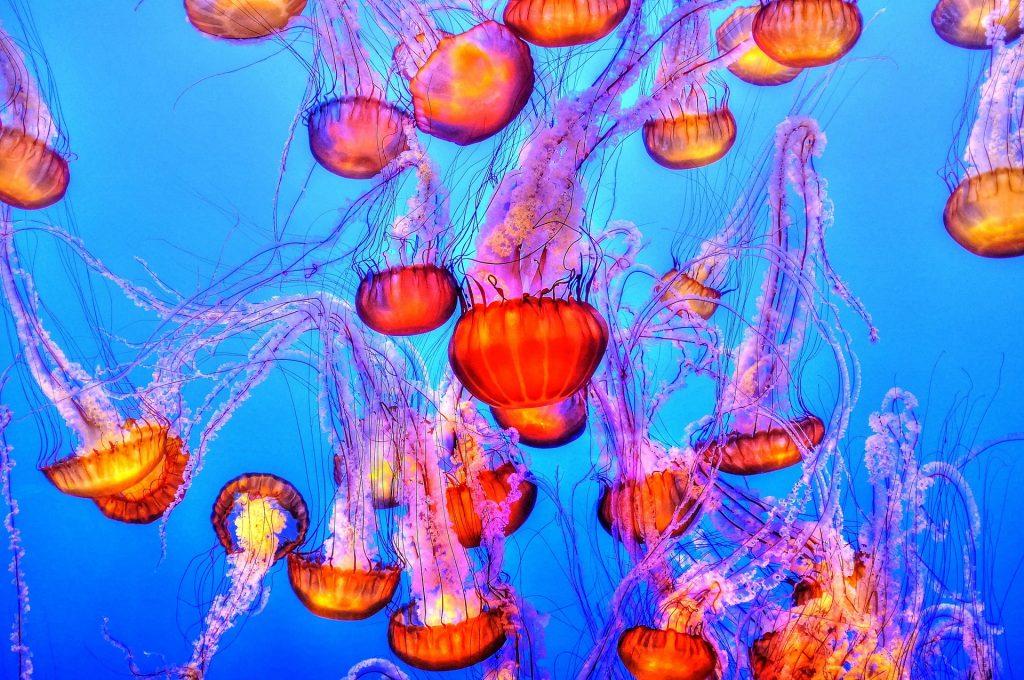 medusas, tentáculos, colorido, peligro, acuario, 1804221104